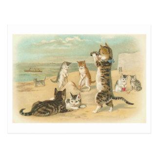 """""""Chats carte postale vintage sur plage"""""""