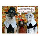Chats comme pèlerins avec la carte de thanksgiving cartes postales