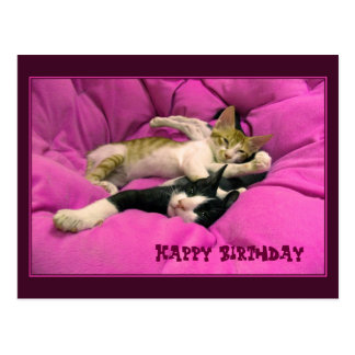 Chats mignons de joyeux anniversaire carte postale