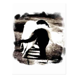 Chats noirs et blancs cartes postales