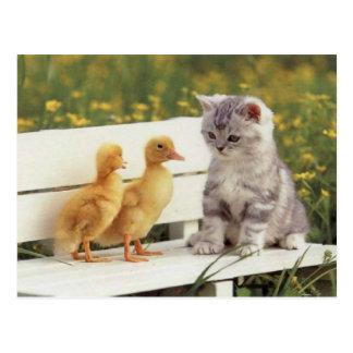 Chats précieux, cartes de chatons, cadeaux - perso cartes postales