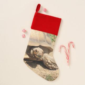 Chaussette De Noël Aile du nez Aldabra