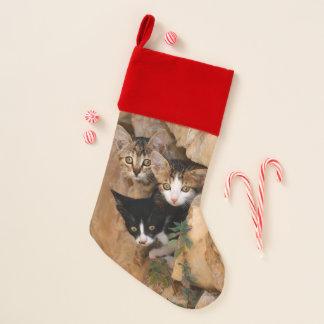 Chaussette De Noël Photo drôle de trois de chat visages curieux