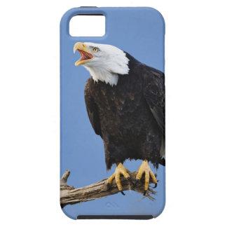 Chauve d'Eagle appelant, Homer, Alaska, Haliaetus Coque iPhone 5 Case-Mate