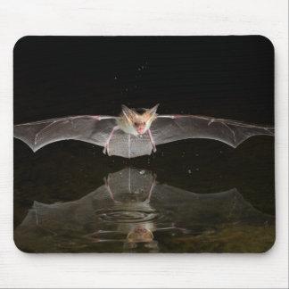 Chauve-souris buvant en vol, l'Arizona Tapis De Souris