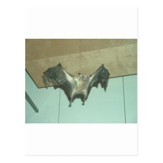 "Chauve-souris énorme ""renard de vol "" carte postale"