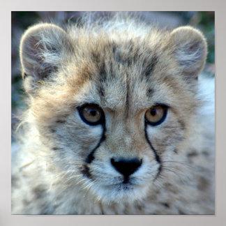 cheetah-cub10x10 affiches