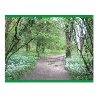 Chemin 1 de région boisée de carte postale d'art