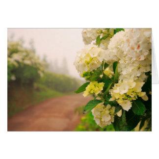 Chemin de terre et hortensias carte de vœux