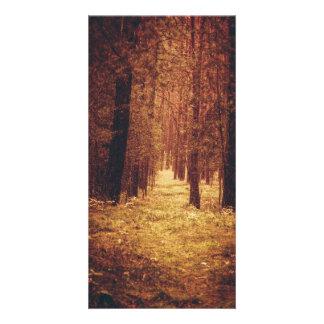 Chemin forestier… cartes avec photo