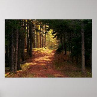 Chemin forestier ensoleillé affiche
