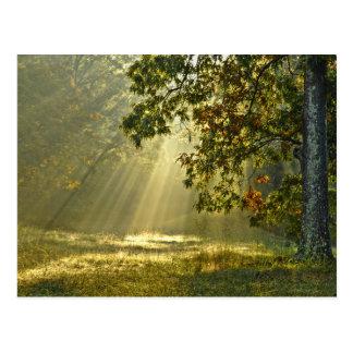 Chêne avec des rayons de soleil de matin carte postale