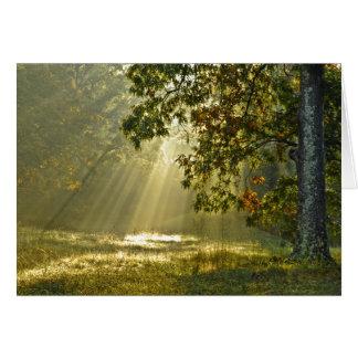 Chêne avec des rayons de soleil de matin cartes