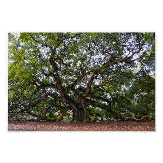 Chêne d'ange sur l'île de Johns, la Caroline du Poster