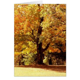 Chêne dans l'automne cartes de vœux