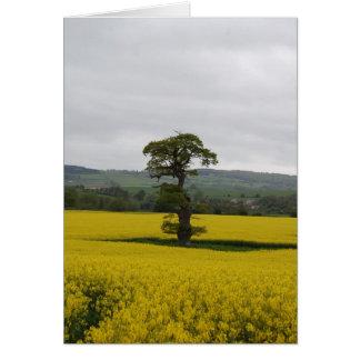 Chêne de forêt cartes de vœux