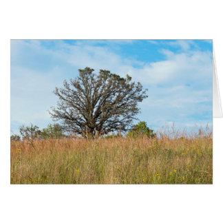 Chêne et prairie grande d'herbe cartes de vœux