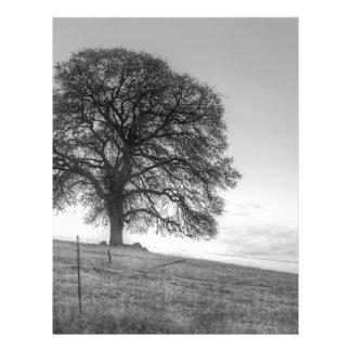Chêne sur une colline prospectus en couleur