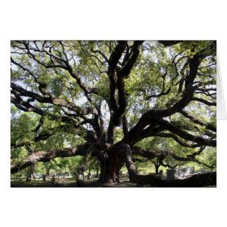 chêne vivant de glenwood cartes de vœux