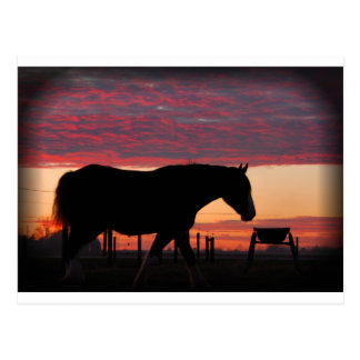 Cheval au coucher du soleil carte postale