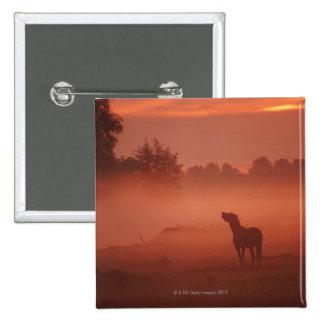 Cheval au lever de soleil badges