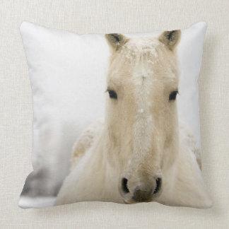 images de cheval coussins. Black Bedroom Furniture Sets. Home Design Ideas
