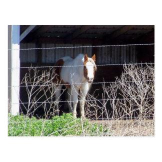 cheval cartes postales