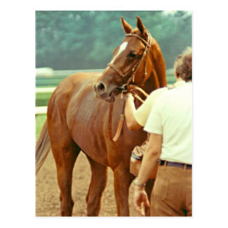 Cheval de course affirmé 1978 de pur sang carte postale