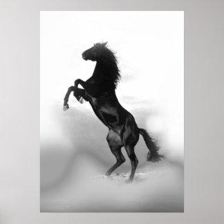 Cheval de élevage blanc noir poster