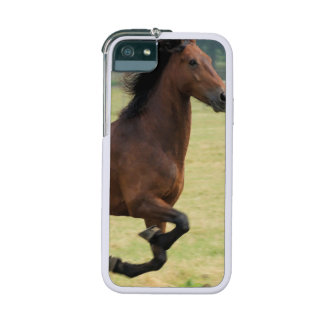 Cheval de mustang coques pour iPhone 5