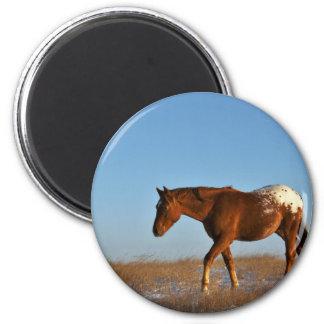 Cheval de prairie aimant