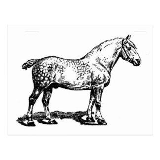 Cheval de trait -- Tacheté Cartes Postales