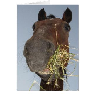 cheval drôle mangeant la carte