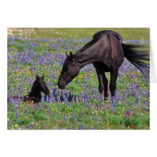Cheval et colt dans le domaine de fleurs sauvages carte de vœux