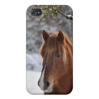 Cheval et gui étuis iPhone 4