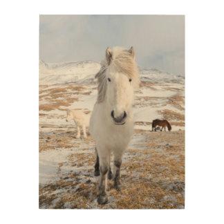 Cheval islandais blanc, Islande Impression Sur Bois