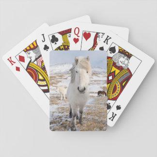 Cheval islandais blanc, Islande Jeu De Cartes