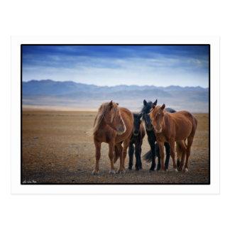 Cheval mongol sauvage, cartes postales de désert