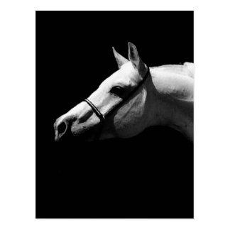 Cheval noir et blanc carte postale
