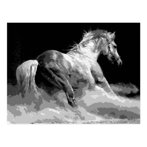 Cheval noir et blanc dans l 39 action cartes postales zazzle - Cheval a imprimer noir et blanc ...