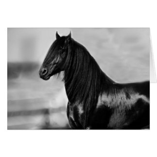 Cheval noir frison fier d'étalon carte de vœux