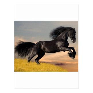 cheval noir sur le désert carte postale