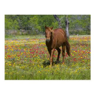 Cheval quart dans le domaine des fleurs sauvages carte postale