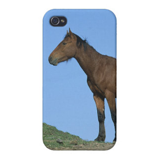 Cheval sauvage de mustang coques iPhone 4