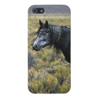 Cheval sauvage de mustang dans le désert coques iPhone 5