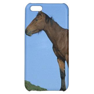 Cheval sauvage de mustang étui iPhone 5C