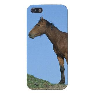 Cheval sauvage de mustang étuis iPhone 5