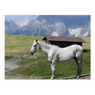 Cheval simple dans un pâturage alpin cartes postales