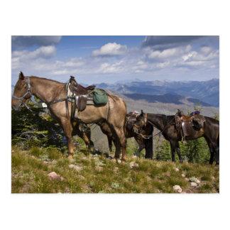 Chevaux (caballus de ferus d'Equus) à l'aperçu Carte Postale