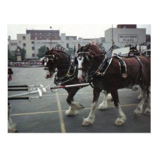 Chevaux de Clydesdale à la plaza de Midtown à Carte Postale
